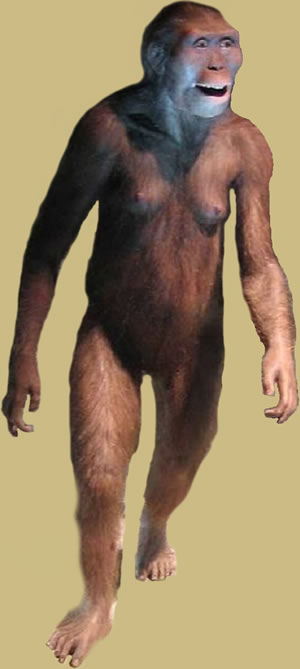 Prehistory - Reconstruction of Lucy