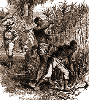 Slavery in the Caribbean - Slaves working on a sugar plantation